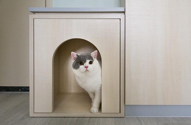 Pets Playground by Sim-Plex Design Studio