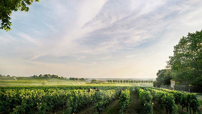 Foster + Partners reveals its vision for the Le Dôme winery in Saint-Émilion